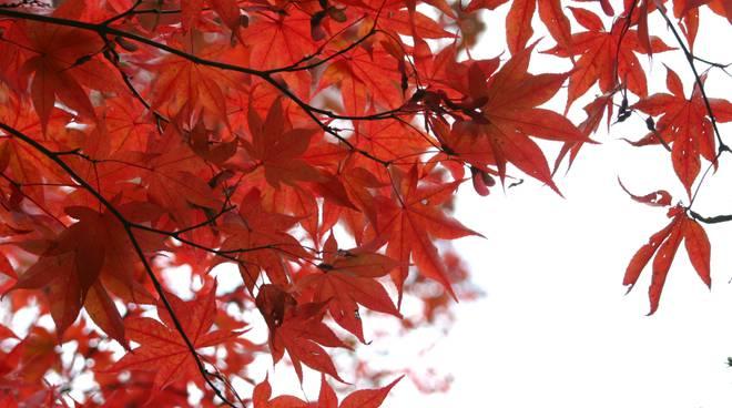 equinozio-autunno-1-jpg-237865.660x368