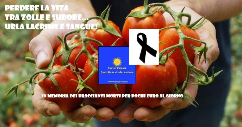 azienda-agricola-f.lli-floriddia-rosolini-022