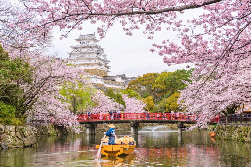 sakura-giappone-maxw-824.jpg